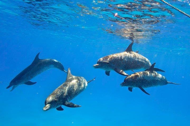 Nager avec les dauphins en liberte archives le blog du - Nager avec les dauphins en piscine ...