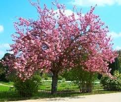 arbre rester nu conte