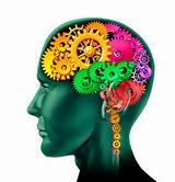 cerveau intelligence emotionnelle