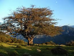 l'arbre qui voulait rester nu conte