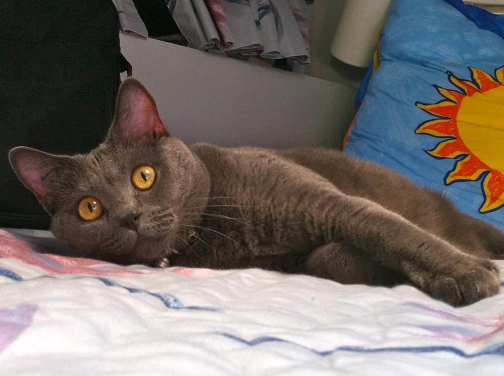 deuil d 39 un animal de compagnie faire le deuil de son chien ou de son chat le blog du. Black Bedroom Furniture Sets. Home Design Ideas